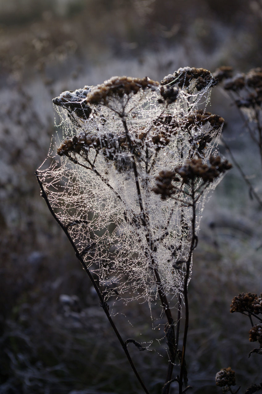 focus on foreground, close-up, no people, nature, day, outdoors, animals in the wild, animal themes, dried plant, fragility, beauty in nature