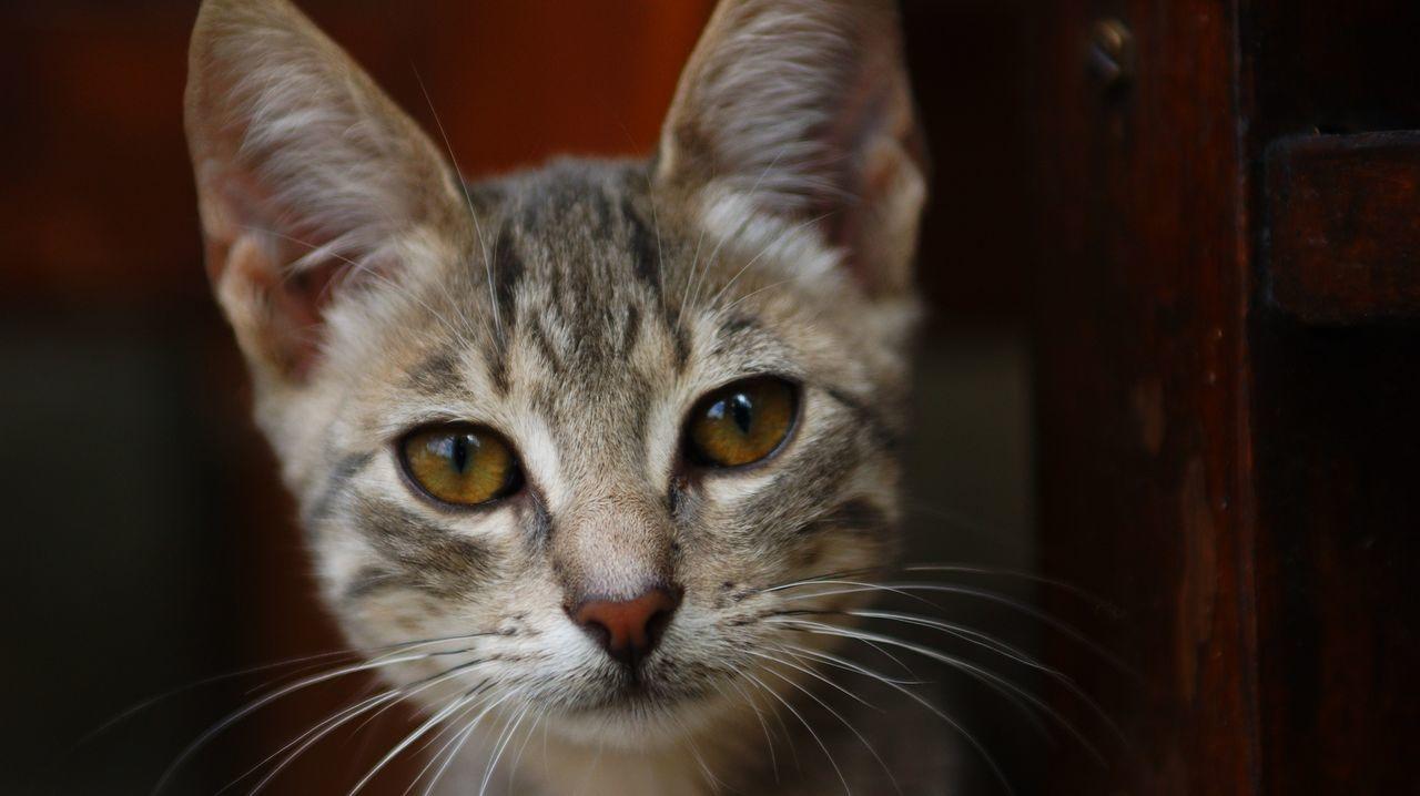 Beautiful stock photos of katzen, pets, domestic animals, domestic cat, animal themes