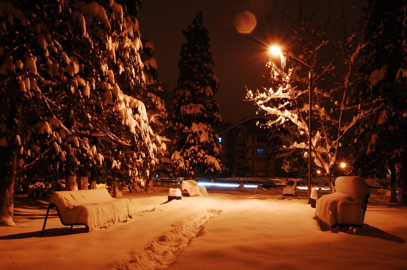 Leafes Tree Night Cold Temperature Christmas Snow Winter City Illuminated