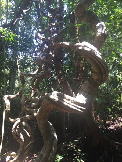 Strange Form Nature Kuching Sarawak Malaysia