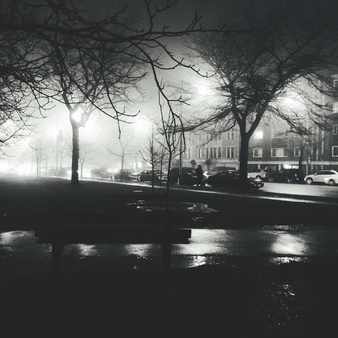 It was a foggy January night in Rogers Park Chicago Tree Bare Tree Car Reflection Street Road Fog City Nature No People Outdoors Foggy Blackandwhite Blackandwhite Photography Rogers Park Chicago Illinois Streetphotography Streetlights