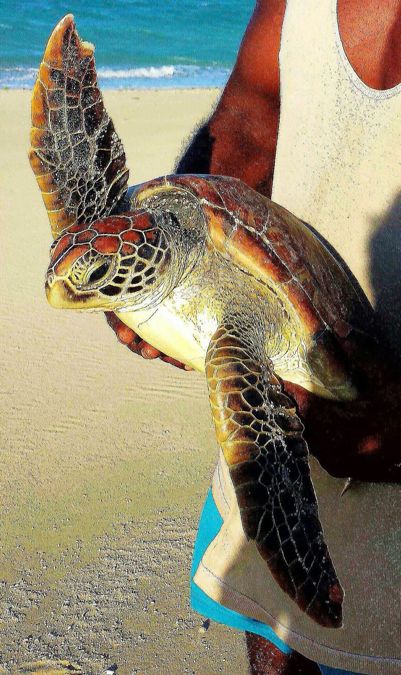 Hawksbill Turtle Check This Out Taking Photos Hello World