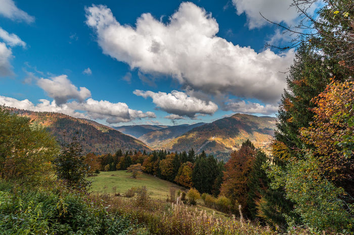 Herbst im Schwarzwald Autumn Beauty In Nature Blackforest Blue Sky Cloud Cloudy Landscape Mountain Sky Trees WoodLand