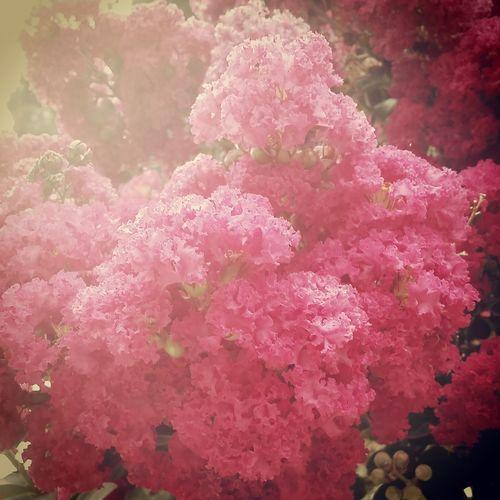 Beautiful Nature Flowers