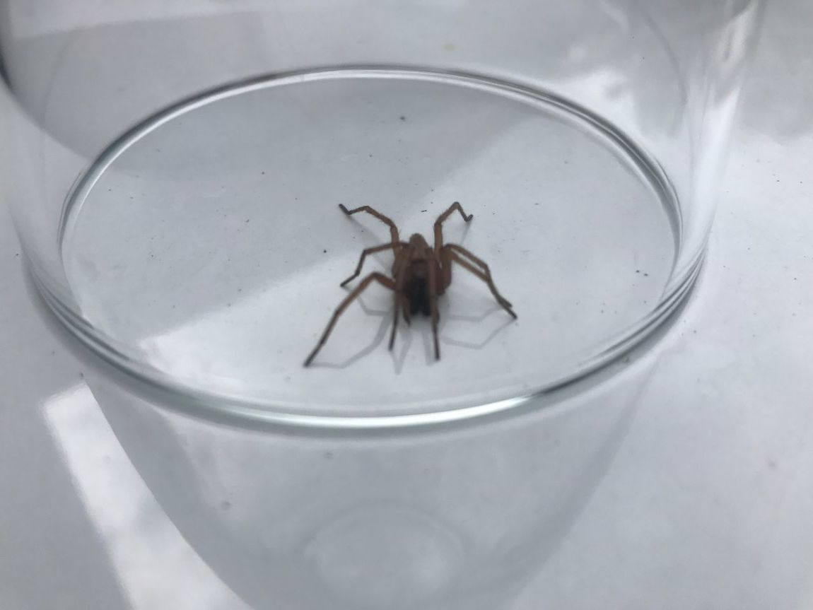 One Animal Animal Themes Insect Animals In The Wild Animal Wildlife High Angle View No People Spider Drinking Glass Close-up Indoors  Water Day Nature Mammal Catchoftheday Nofilter#noedit