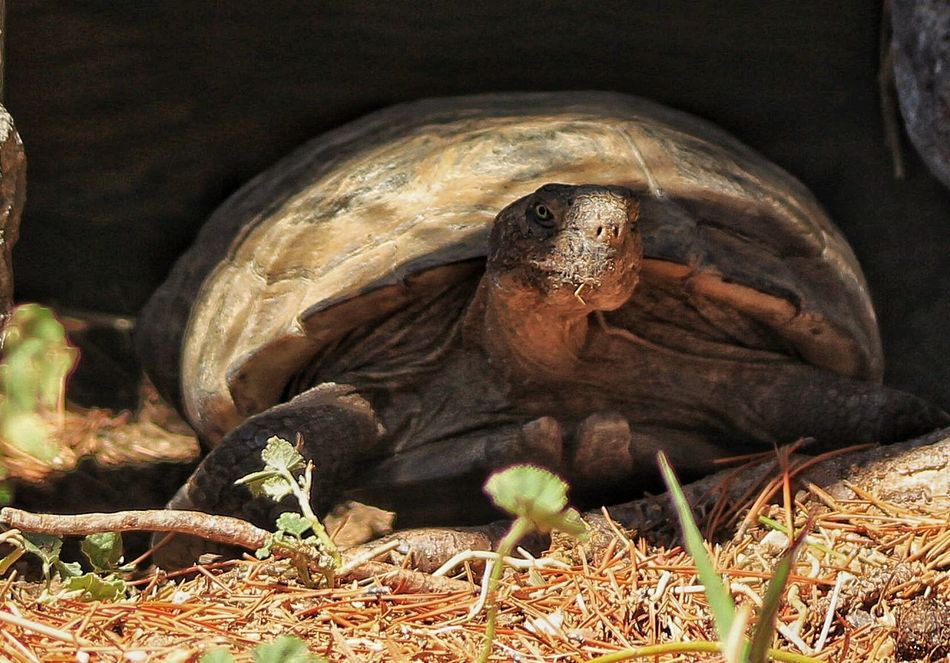 Beautiful stock photos of turtle, Animal Shell, Animal Themes, Animals In The Wild, Brigham City