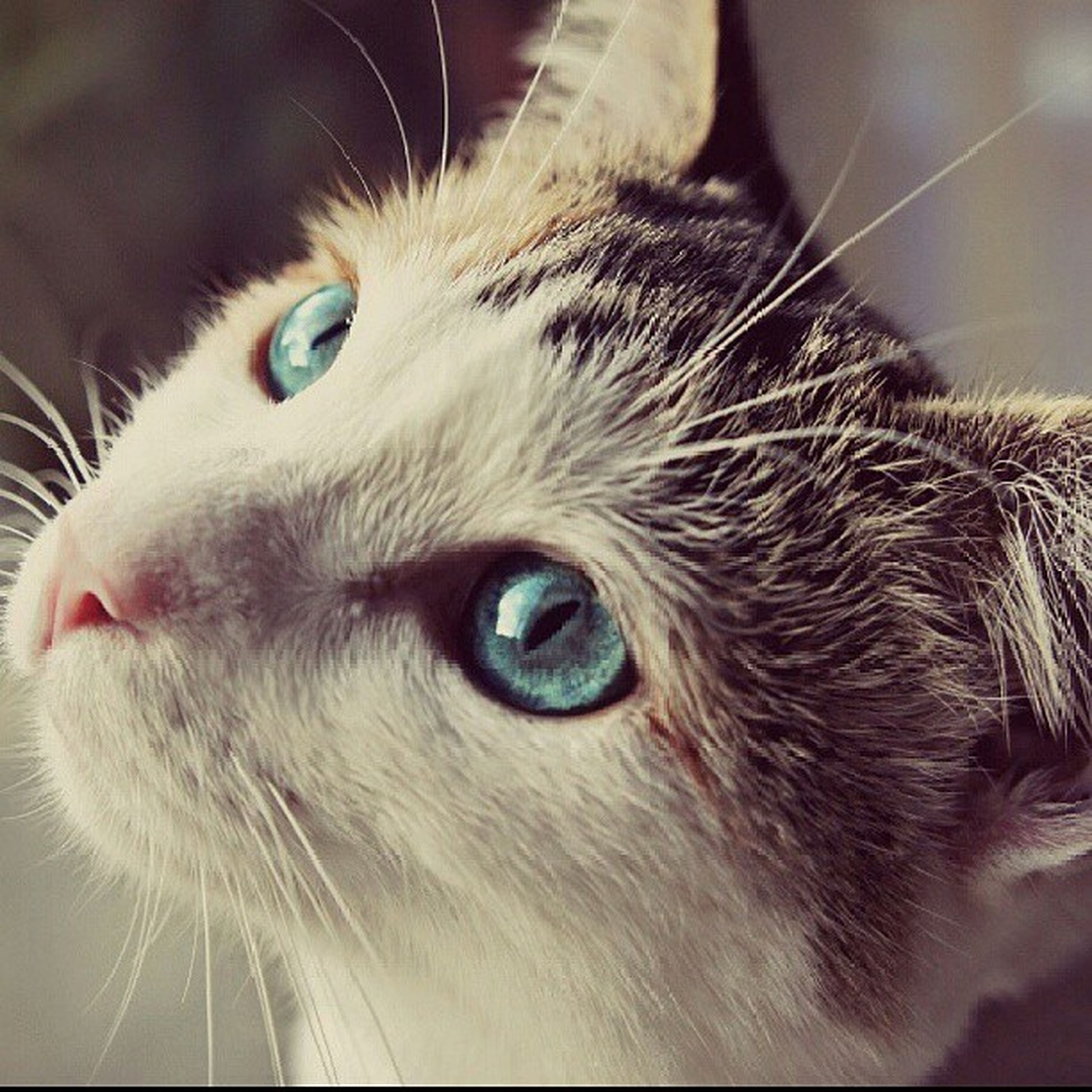 animal themes, one animal, domestic animals, pets, domestic cat, mammal, cat, feline, whisker, indoors, animal head, close-up, animal body part, animal eye, focus on foreground, looking away, portrait, alertness, snout