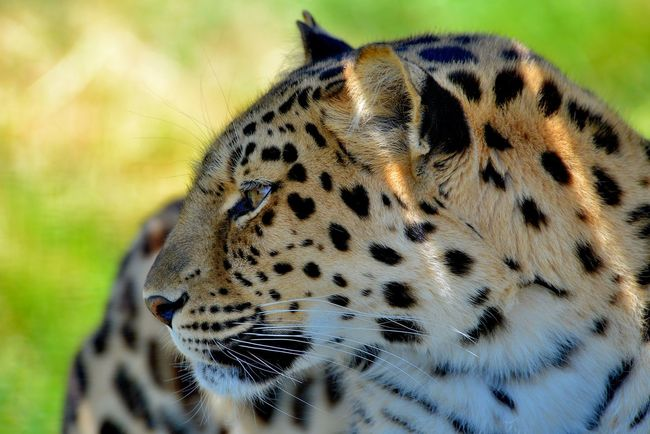 Cat Animals Nature_collection Nature Wildlife Landscape Hanging Out Eye4photography  Portrait Popular