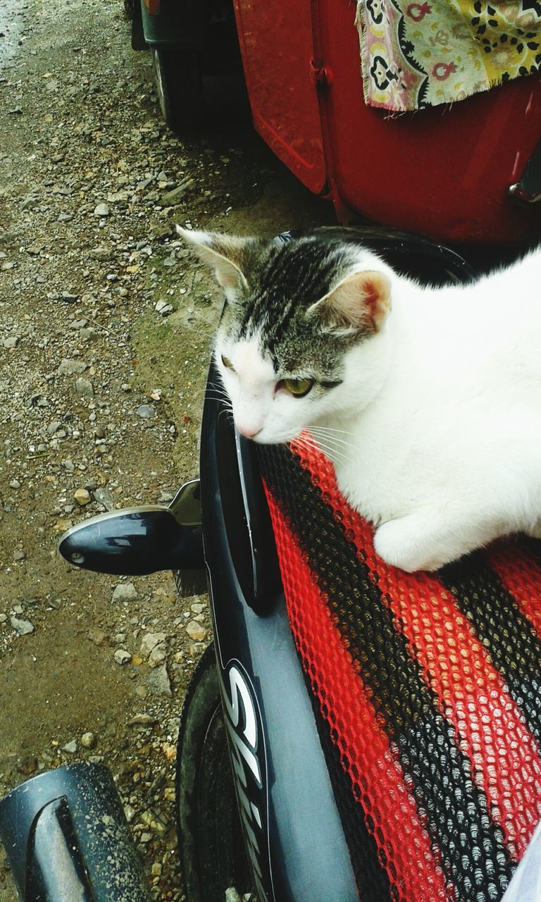 domestic cat, domestic animals, one animal, pets, animal themes, mammal, feline, cat, no people, day, sitting, outdoors, close-up