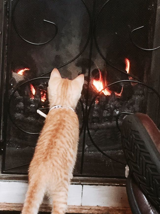 Garfield wondering what the fire is