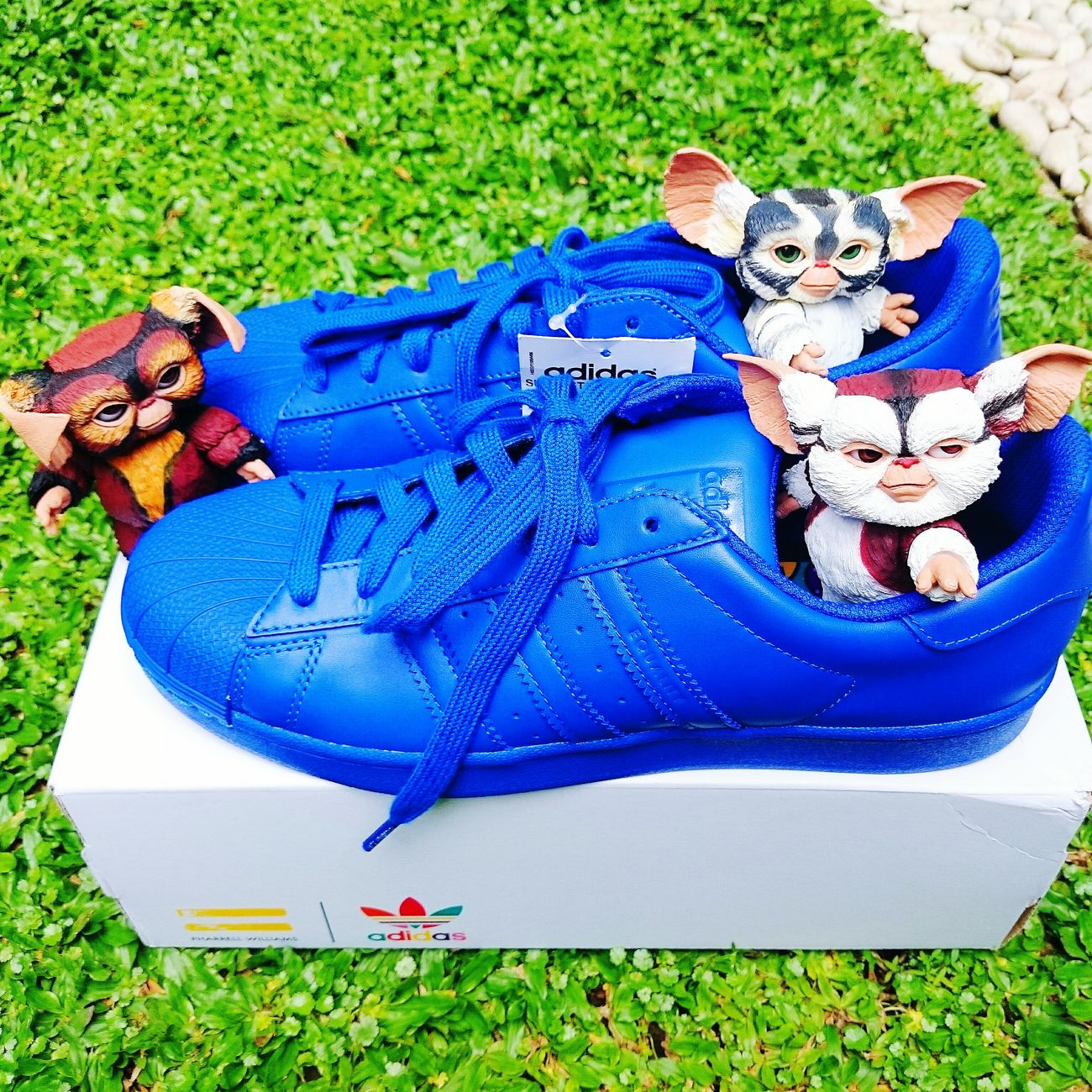 My Gremlins playing with my Adidas Adidas Supercolor Sneakers
