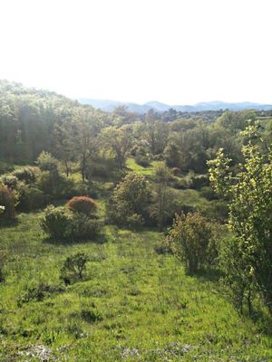 Earth Day at Healdsburg Ridge Open Space Preserve by Laura O'Hanesian