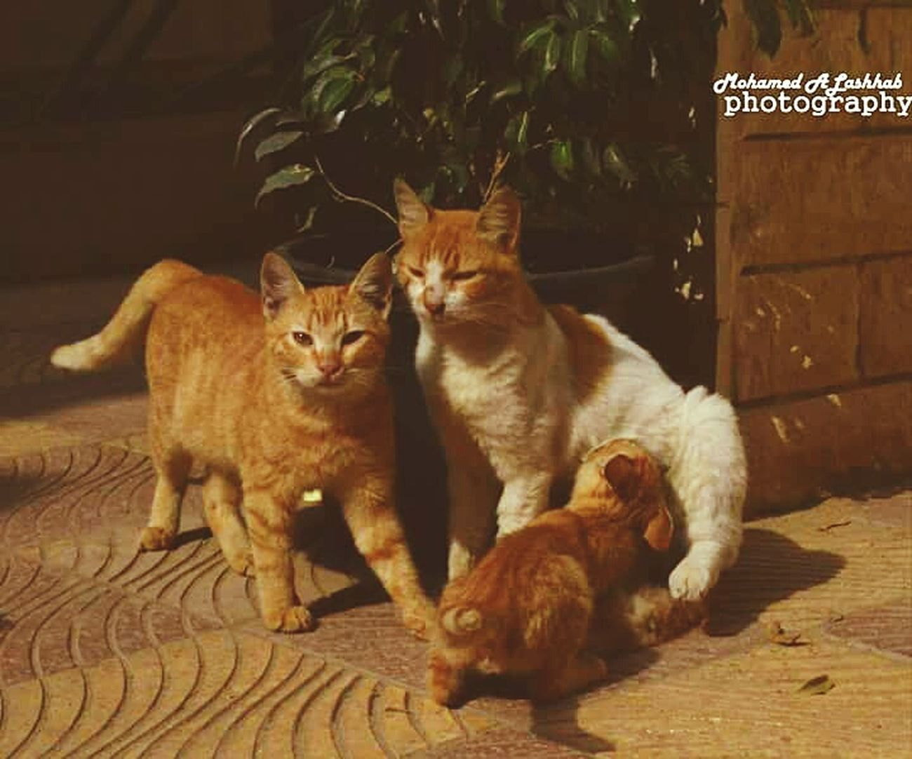 Naturalism Evryday Foto In Cairo Life Little Monkey Egypt Cat♡ Cats 🐱 Catslife Baby Cat