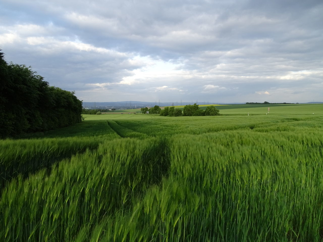 Green Color Agriculture Landscape Nature Growth Beauty In Nature Outdoors Field No People Panorama Panoramashot Panoramic Landscape Fields And Sky Fields Fieldscape Fields Of Green Cloud - Sky Wildnature
