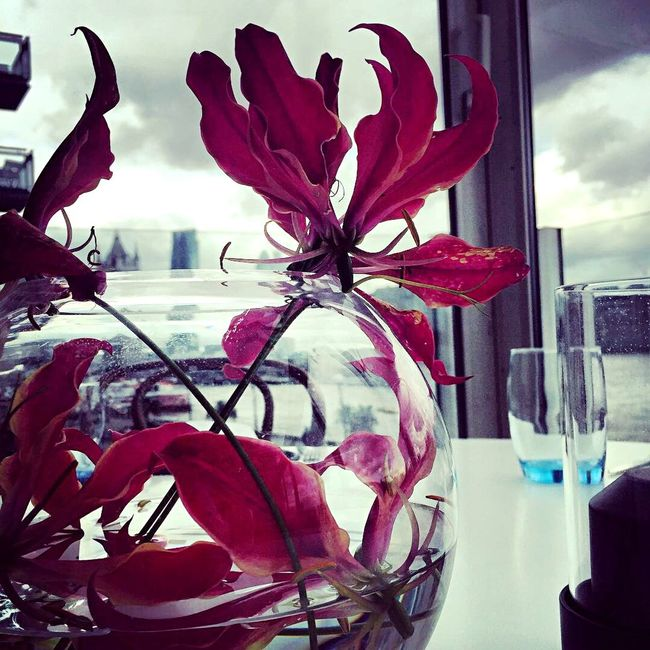Nice Day Hello World Sea And Sky Hanging Out Glassofwater RedFlower Beutifulflowers Thatsall 💯💯👏😃