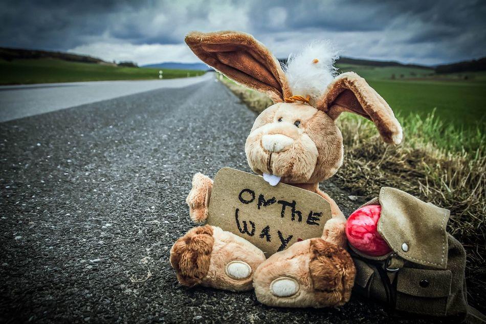 Beautiful stock photos of osterhasen, Animal Representation, Animal Toy, Backpack, Cloud - Sky