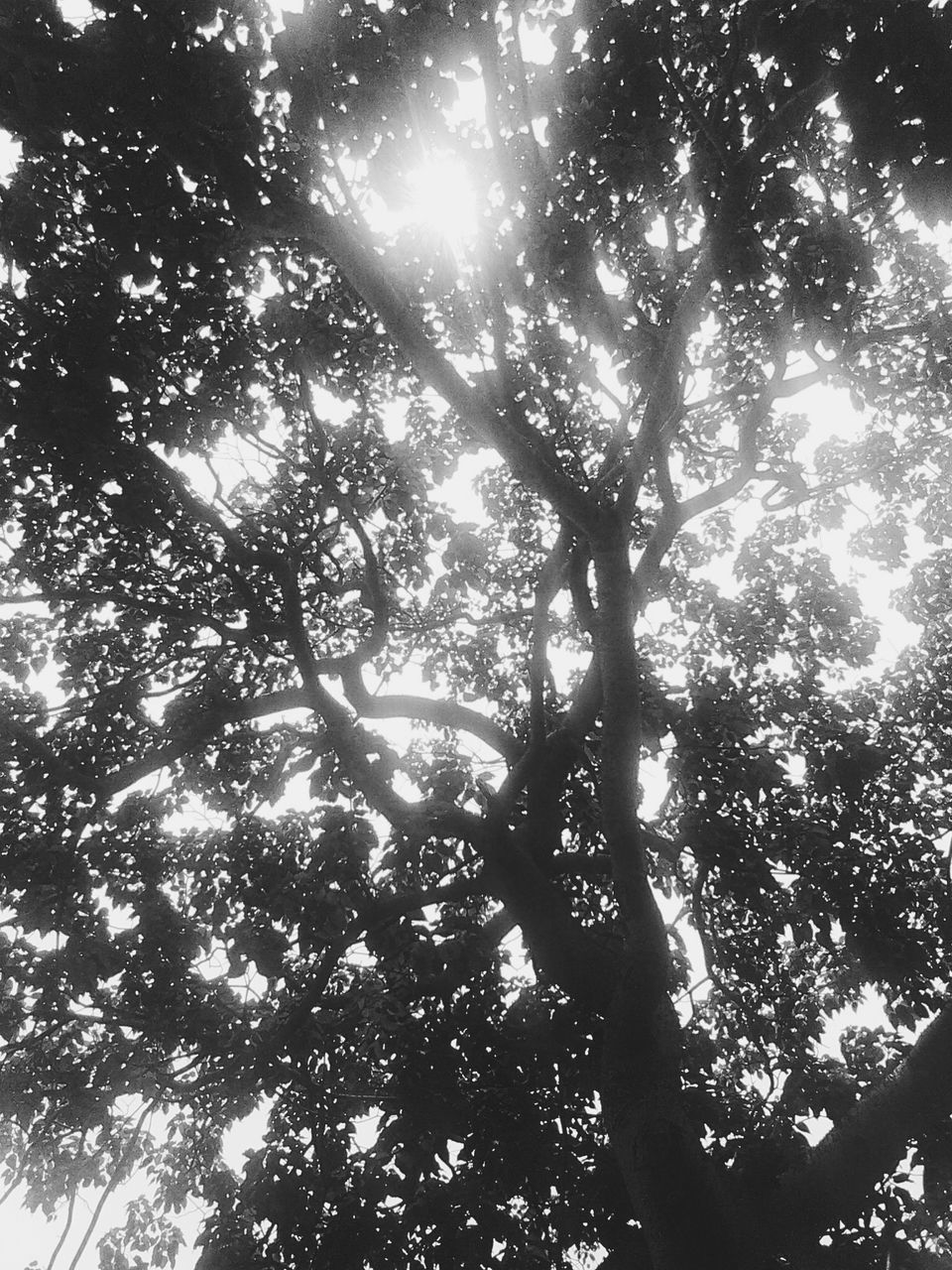 tree, low angle view, sunlight, nature, sunbeam, day, no people, growth, branch, outdoors, tranquility, forest, beauty in nature, scenics, backgrounds, tree trunk, sky