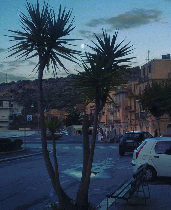 Luna Palm Tree Tree Sky City Cityscape Luna❤ Mattinata Mattina Presto