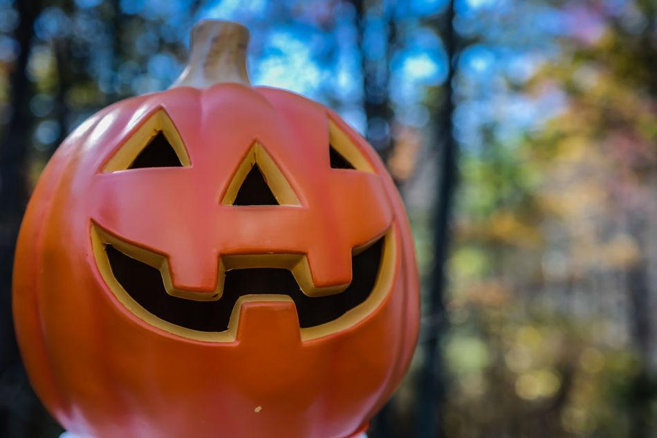 Beautiful stock photos of pumpkin, Art, Carving - Craft Product, Close-Up, Creativity