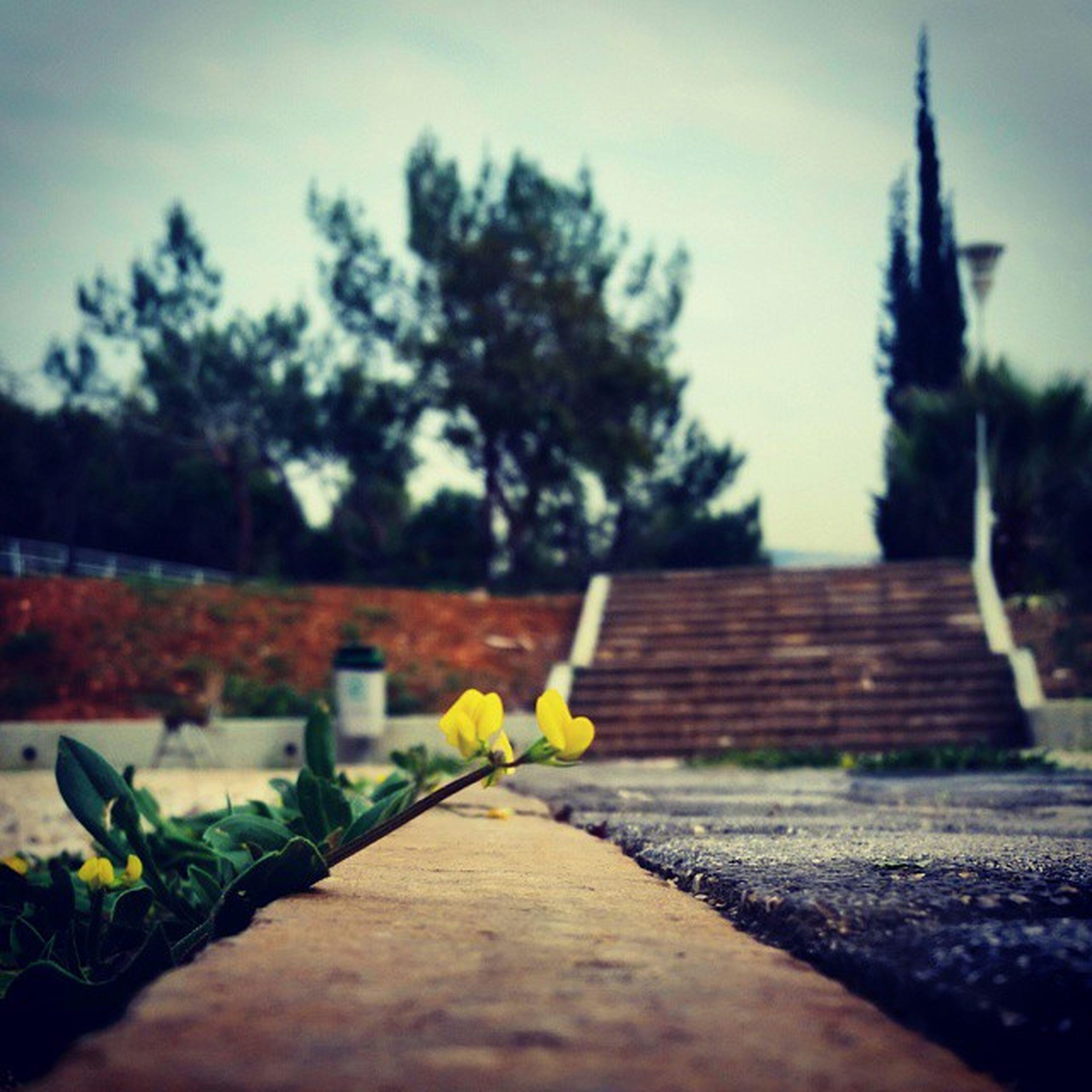 لقاء_الأرواح Lebanese_university On_my_way_to_the_class Masters m2