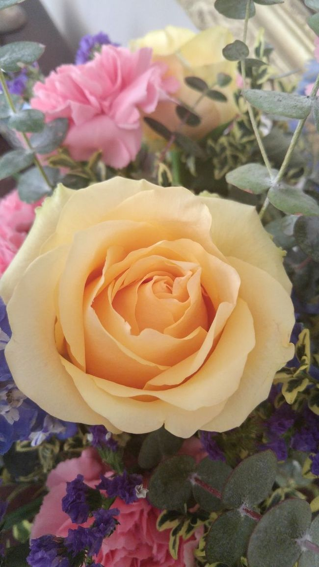 Pastel Power no filter no edit Flowerporn Flower Collection Flower Flowers Yellow Flower Yellow Bouquet Funeral Yellow Rose Flower Photography Perfect Perfection No Filter Raw Beauty The Color Of Life The Colors Of Spring Home Is Where The Art Is