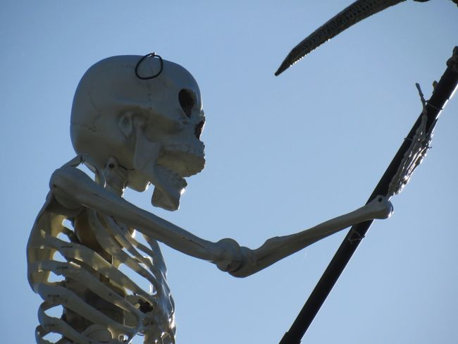 Halloween Prop Blue Bonestructure Clear Sky Creativity Day Fun Things In Texas Low Angle View Nature Outdoors Skeleton