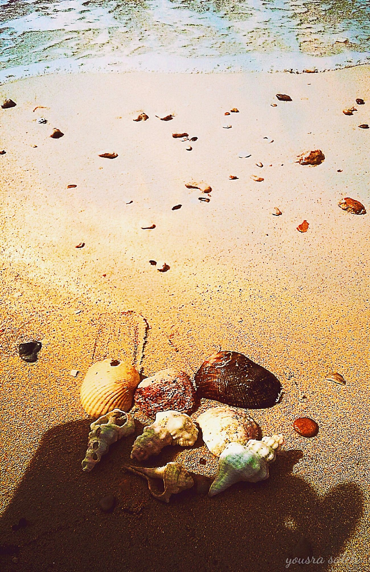 Seashells Stones And Shells Stones Stones And Pebbles Seashell Fossils Golden Sand Sand Seashell Beach Summer Seashell Collection Beach Stones & Water Seashells Picking Nature Colorful Nature Nature Photography Nature Beauty Nature_collection Naturelovers Beauty In Nature Relaxing Relaxing View Sunny Day Summer Memories Ras Sudr Egypt Love To Take Photos ❤