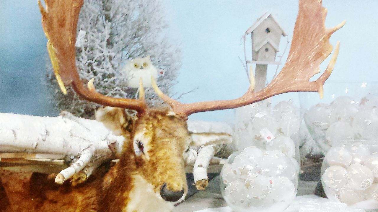 indoors, christmas, no people, celebration, statue, close-up, animal themes, day, christmas decoration, mammal
