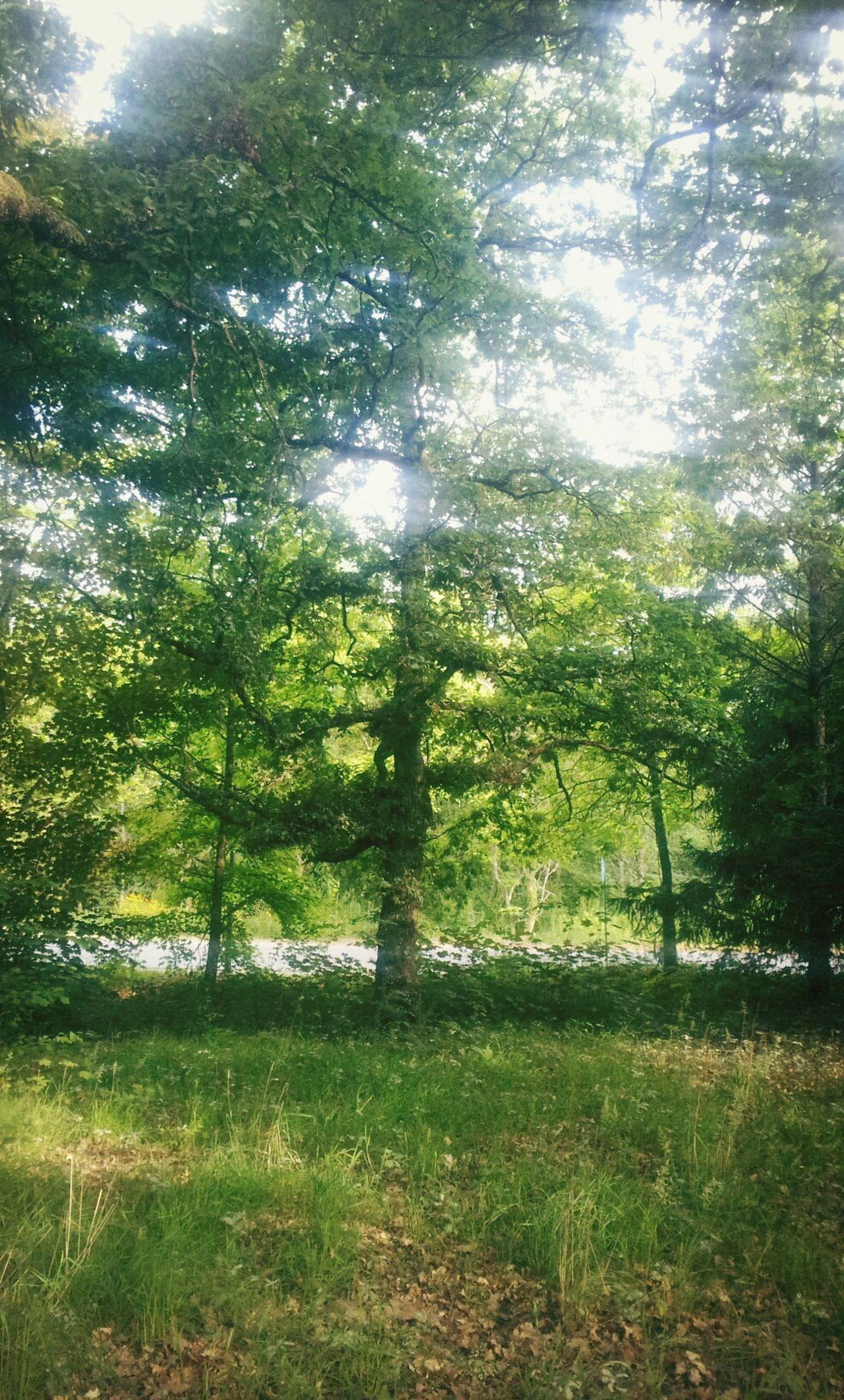 Nature Natureza