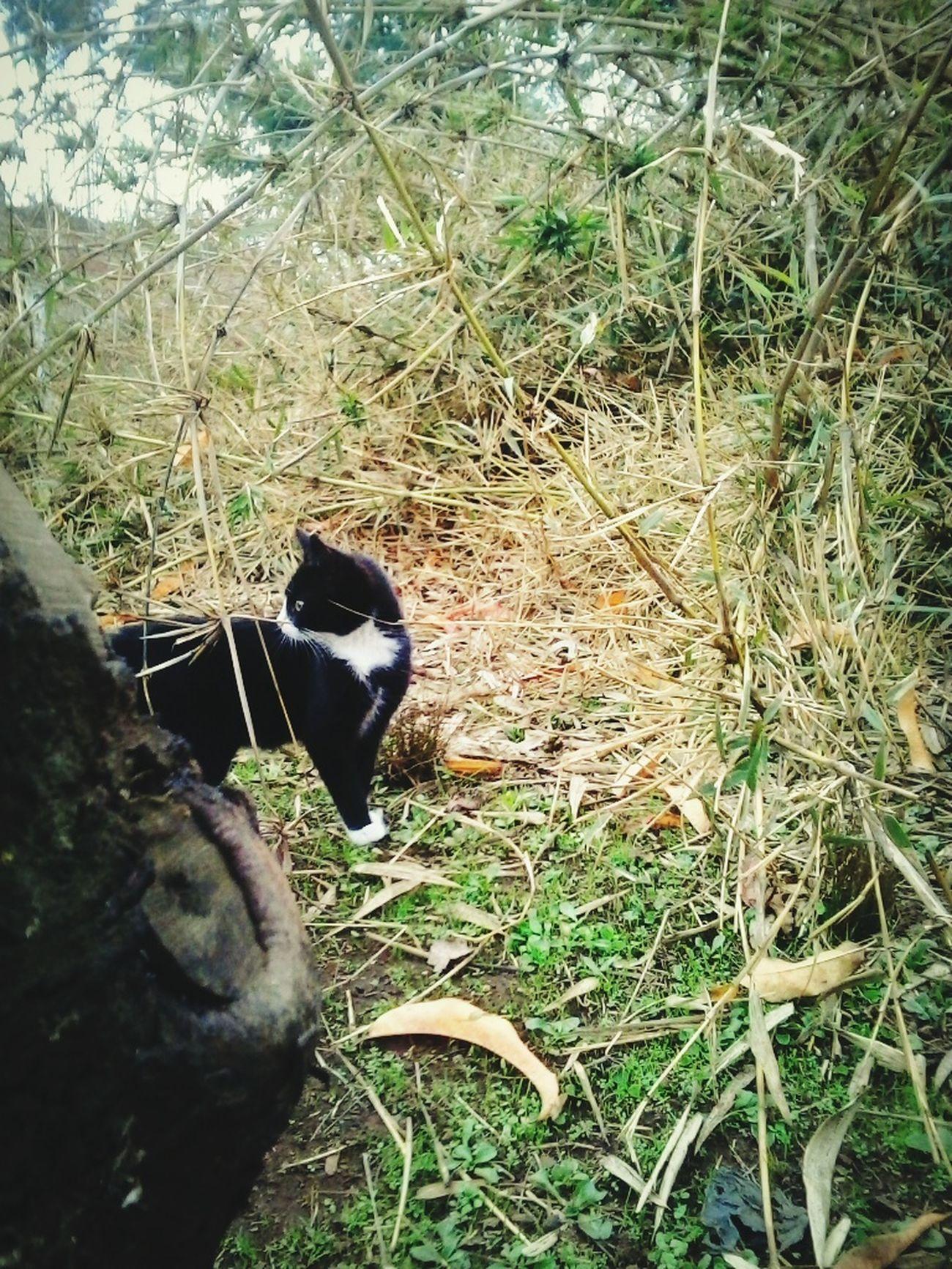 Mi chiquita :3 Venhus La Pequeña Salvaje Nature Photography Autumn Collection Cat♡ Cat Lovers