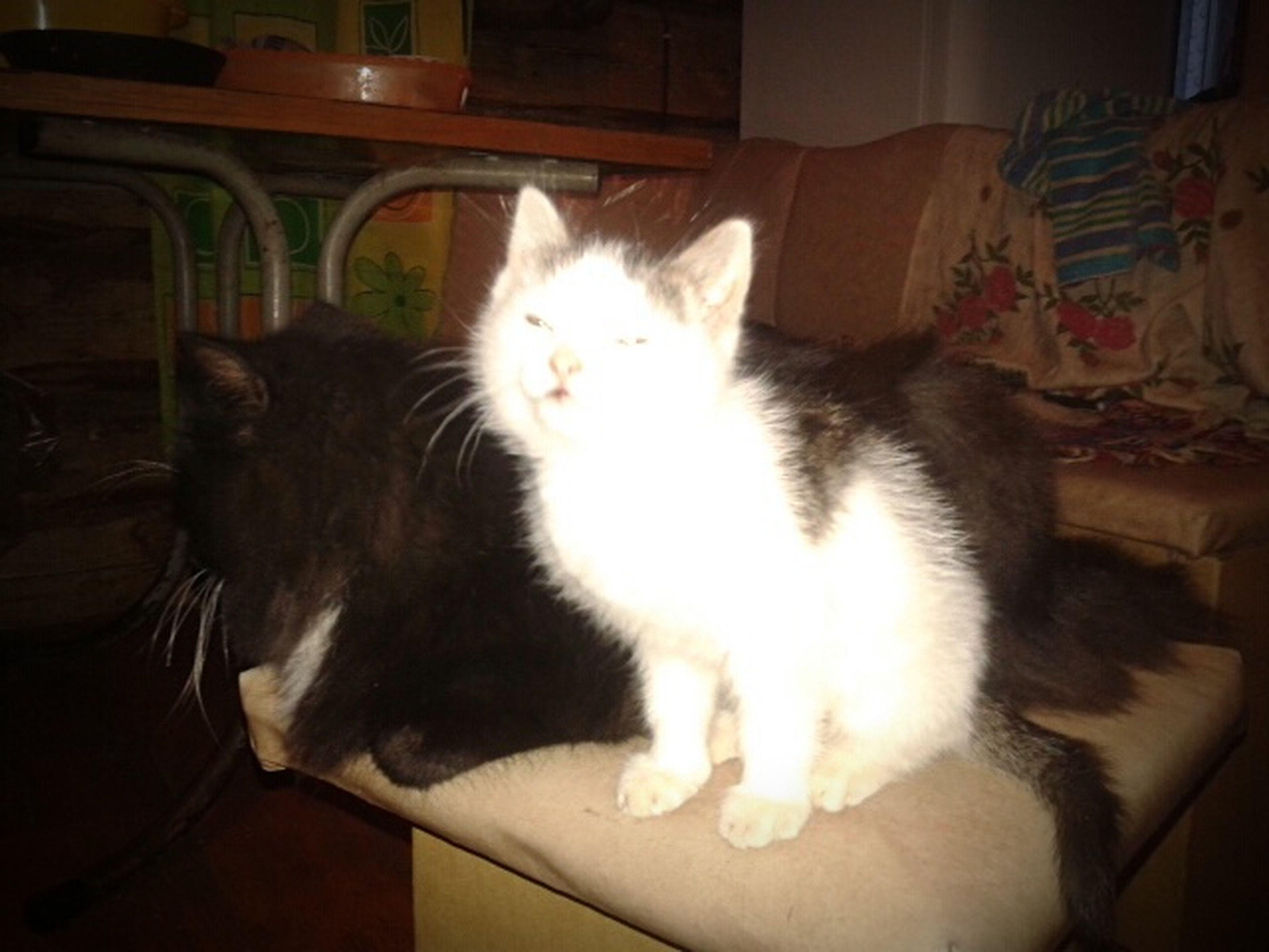 Cat Misha And Kyzia миша и кузя My Mom Cats I Love Cats Very