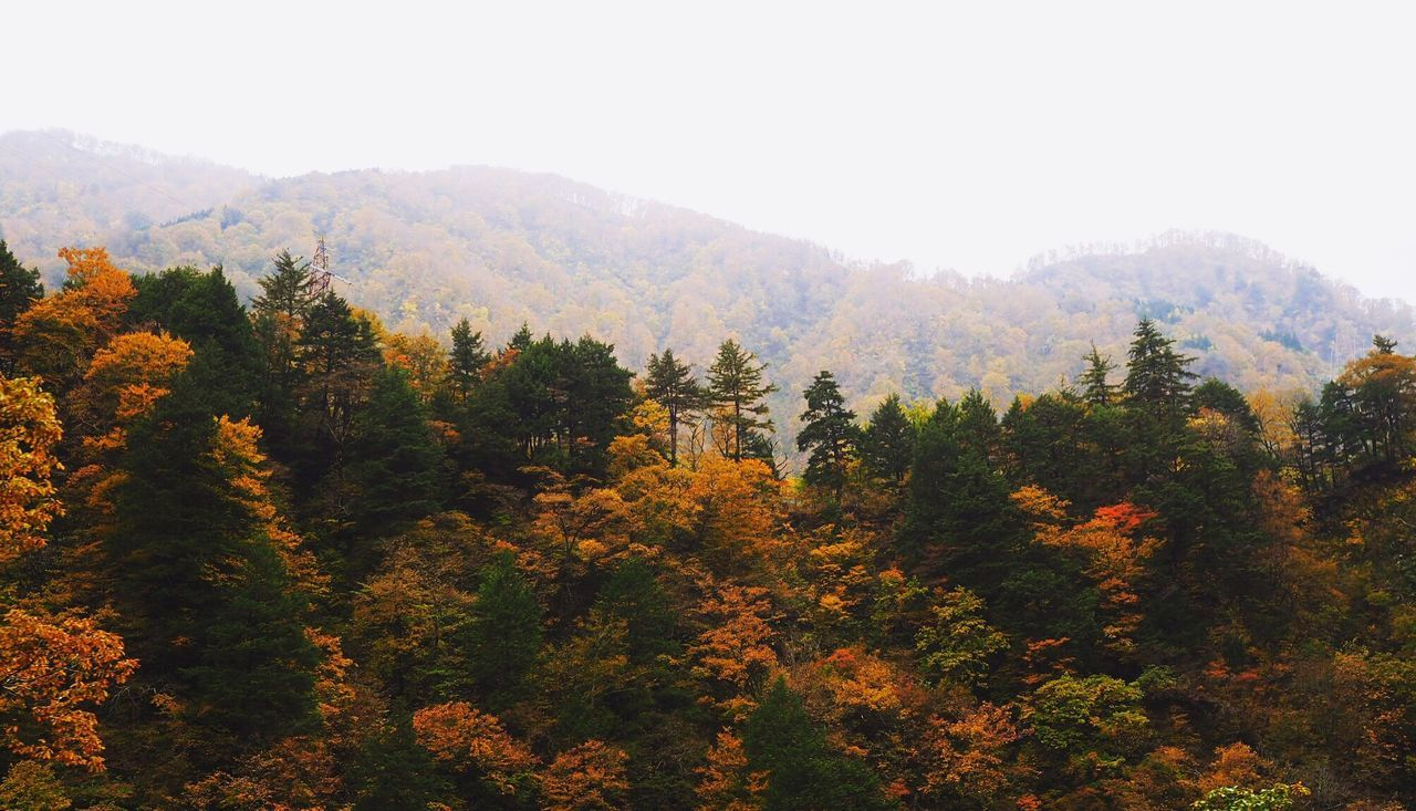 Tree Nature Growth Pine Woodland Forest Autumn Mountain Beauty In Nature Landscape No People Tranquility Sky Outdoors Scenics Treetop Day