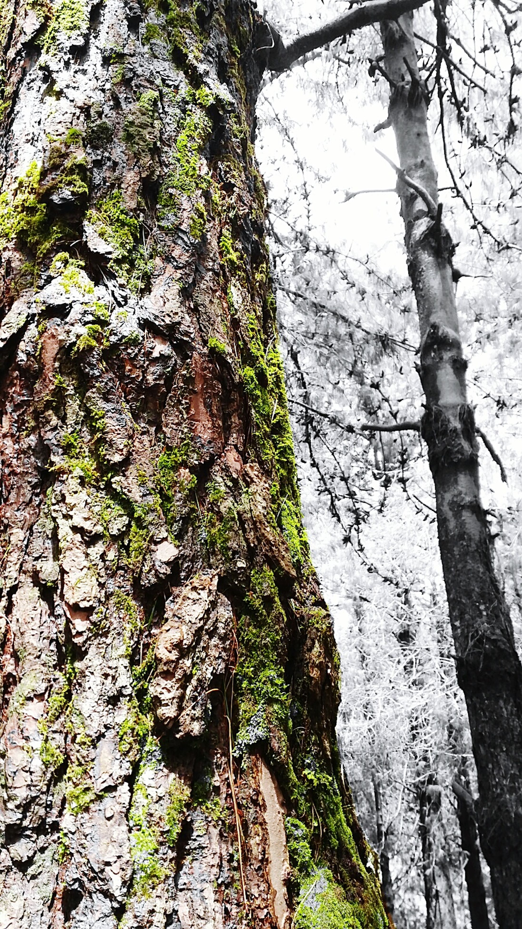 tree, tree trunk, growth, nature, low angle view, tranquility, day, outdoors, beauty in nature, no people, tranquil scene, sky, scenics, non-urban scene, close-up