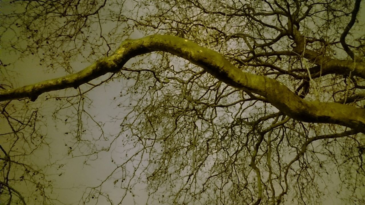 branch, tree, nature, low angle view, bare tree, no people, beauty in nature, outdoors, day, scenics, sky, close-up