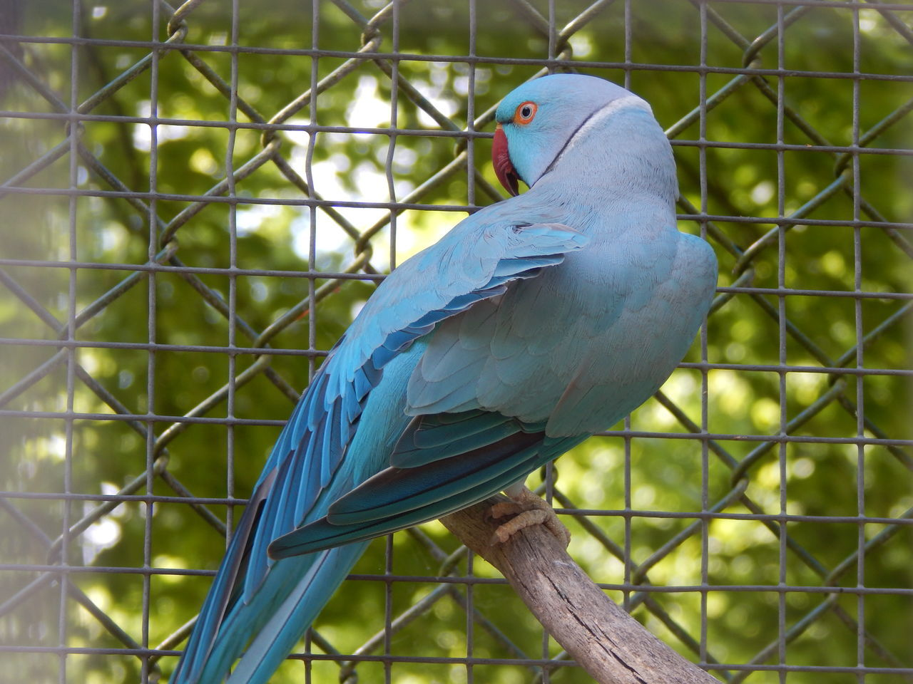 one animal, bird, animal themes, animals in the wild, perching, animal wildlife, close-up, no people, day, focus on foreground, outdoors, nature