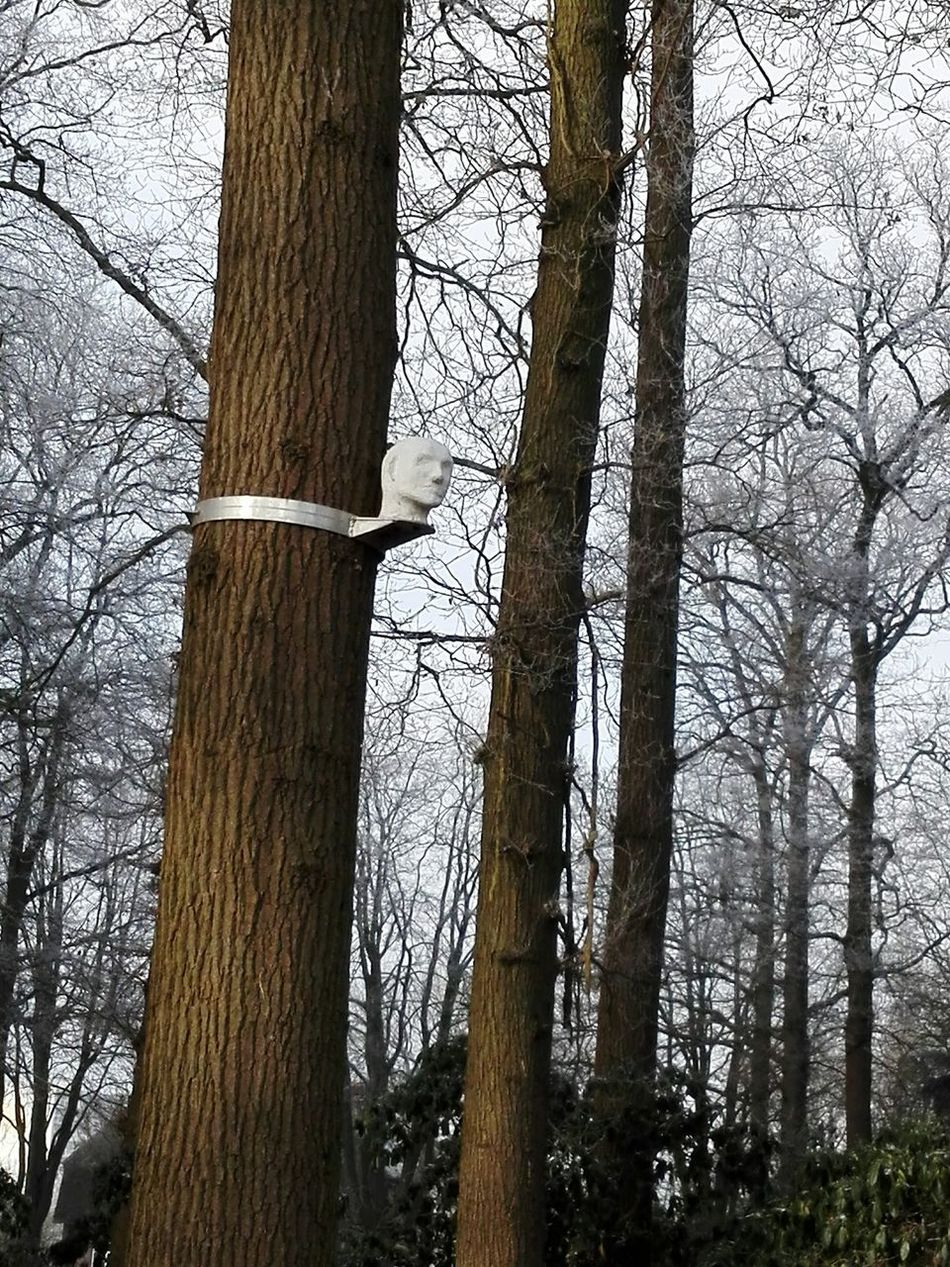 Hmm that's creepy Tree Tree Trunk Nature Bare Tree Growth Low Angle View No People Forest Beauty In Nature Outdoors Sky Day