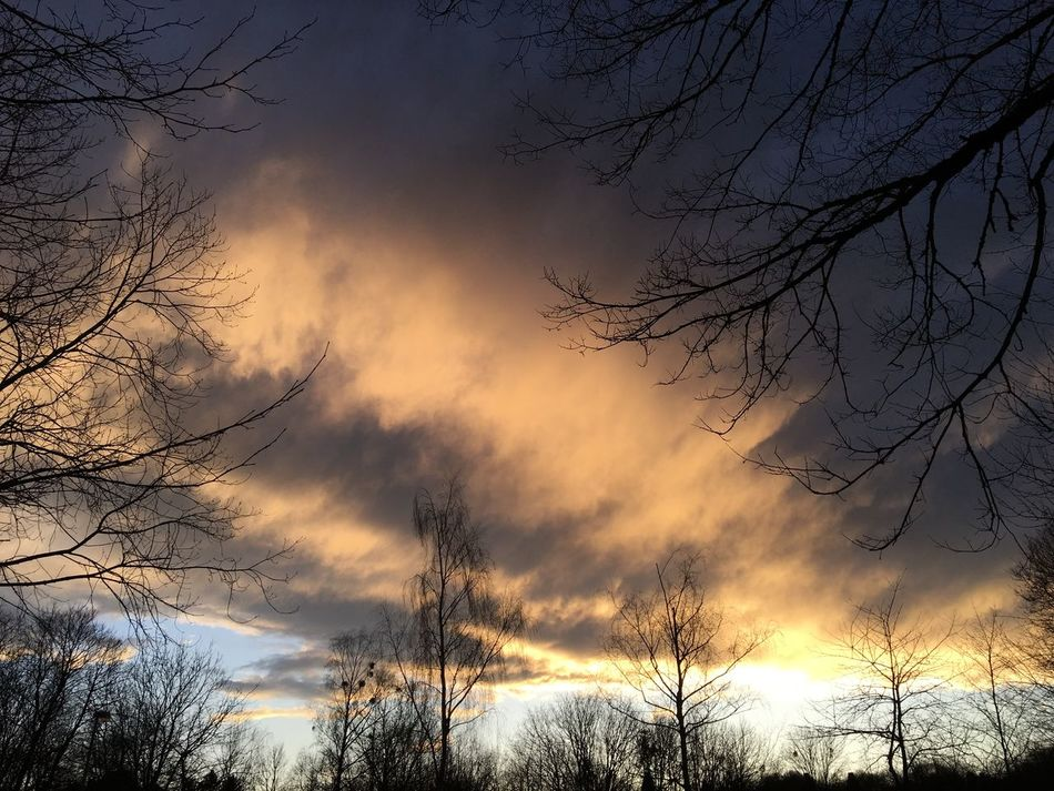 Dramatic sky, Himmel, Wolken, Licht, Stimmung, Farben, Bare Tree Tree Nature Beauty In Nature Sky Low Angle View Branch Sunset Tranquil Scene Tranquility Outdoors Cloud - Sky No People