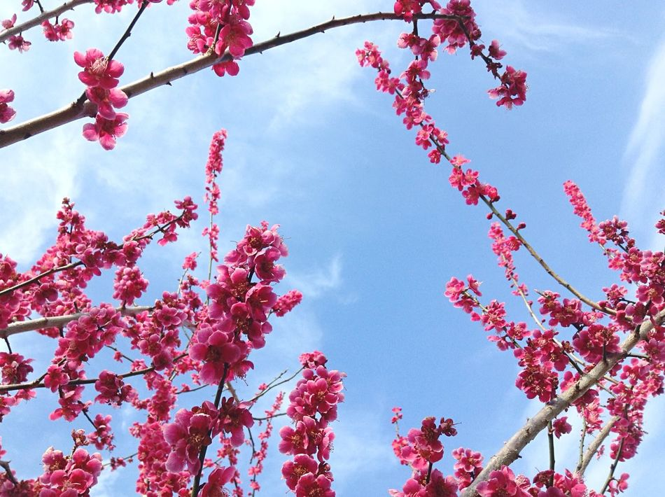 Beautiful stock photos of weather, Beauty In Nature, Blossom, Botany, Branch