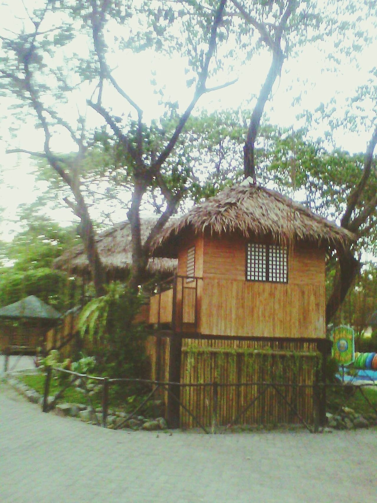 Tree Architecture Nature House Built Structure Building Exterior No People Outdoors Day Sky