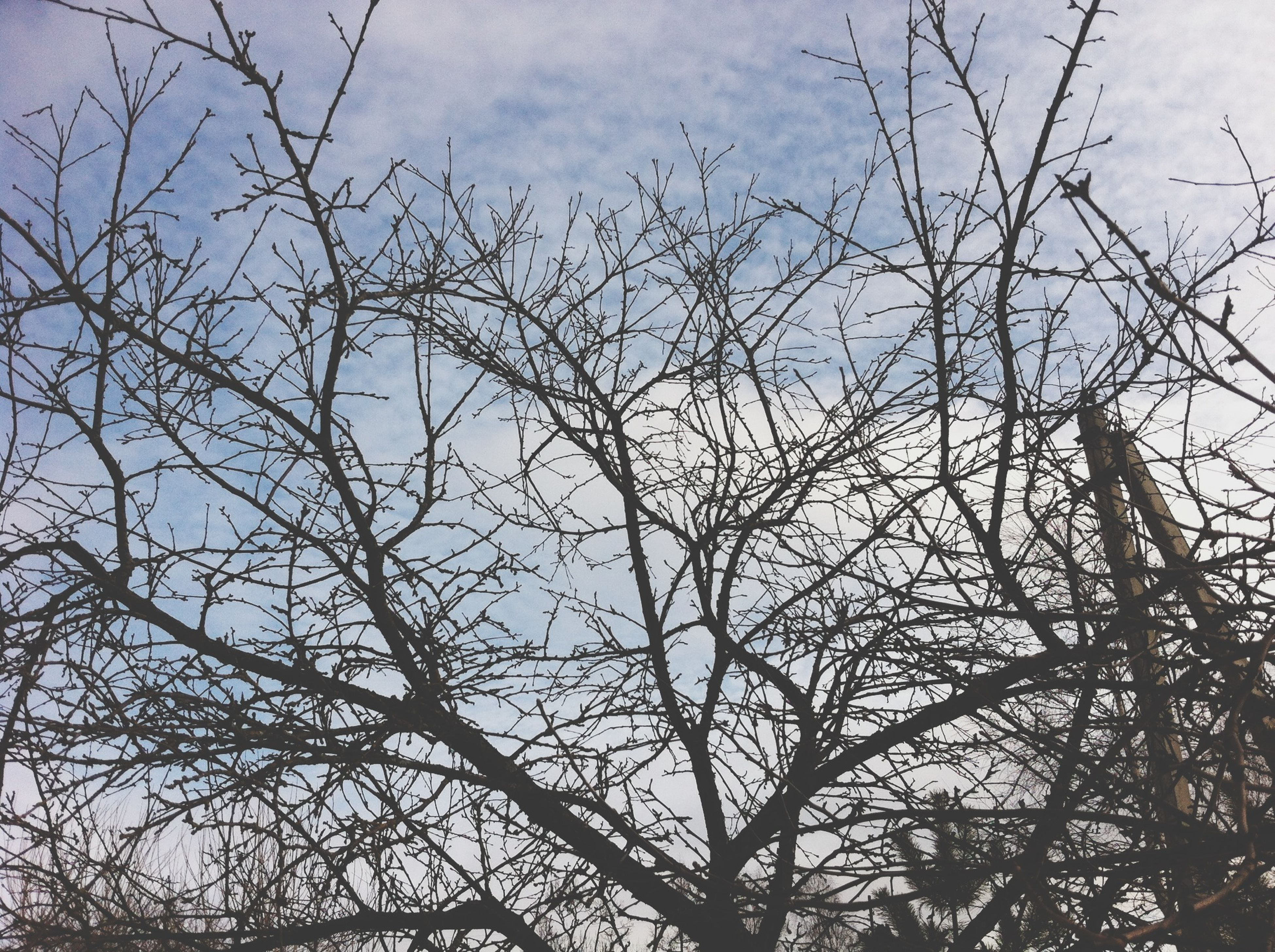 low angle view, branch, bare tree, tree, sky, nature, tranquility, cloud - sky, beauty in nature, growth, outdoors, scenics, day, silhouette, no people, cloudy, cloud, tranquil scene, high section, full frame