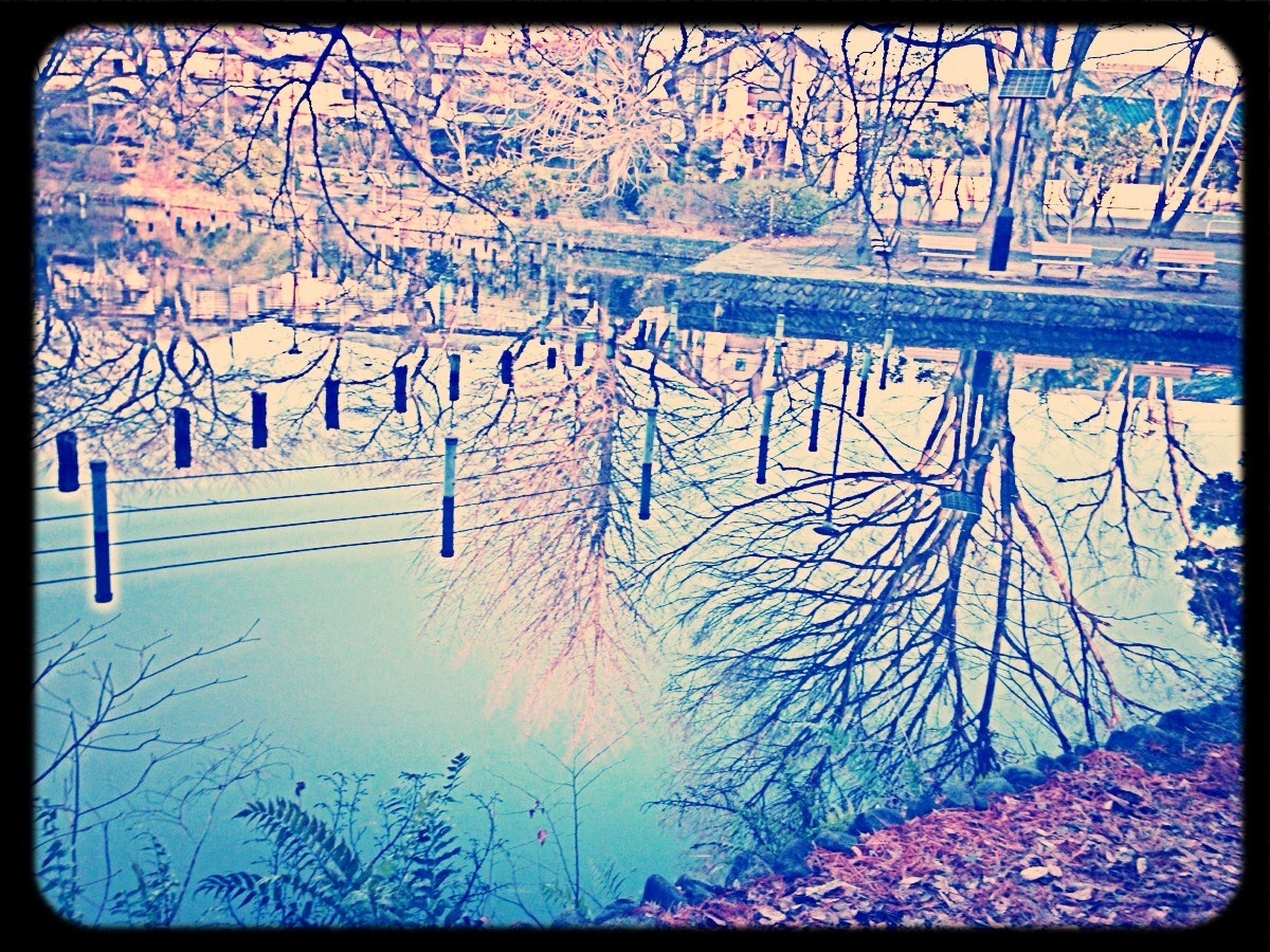 transfer print, auto post production filter, tree, water, built structure, reflection, bare tree, architecture, day, pond, outdoors, nature, plant, art, branch, creativity, no people, park - man made space, tranquility, art and craft