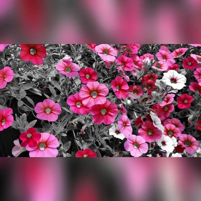 Rebels_united Thevilleatig Sh_challenge Rsa_nature rsa_ladies streamzoofamily royalsnappingartists NexLevelPix bipolaroid_asylum nature pink
