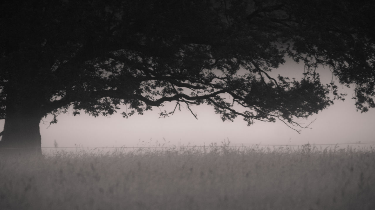Beautiful stock photos of meadow, Auto Post Production Filter, Black And White, Day, Fog