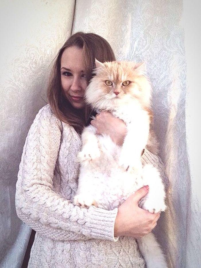 🐱🐈 кот бублик