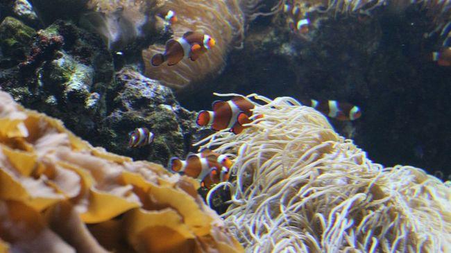 Vancouver Aquarium Fish Clownfish Aquarium Here Fishy Fishy Canada