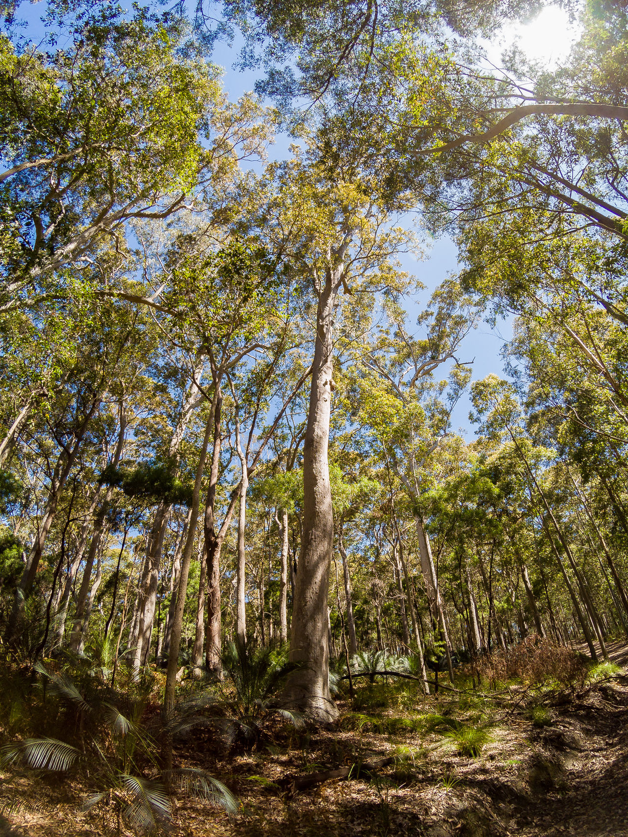 Wide-angle / low angle view of Australian bush / forest along the south-eastern coastline. Australia Australian Bush Australian Landscape Beauty In Nature Day Forest Growth Landscapes Low Angle View Nature No People Outdoors Tranquility Tree