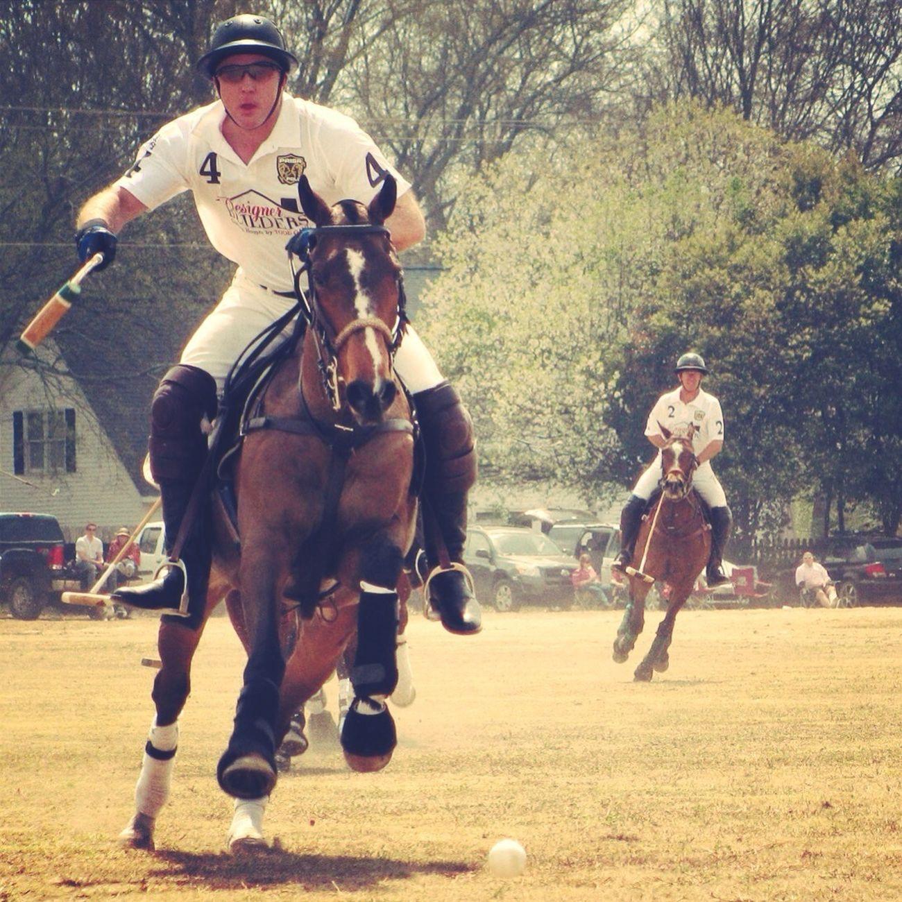 Horse Riding Horses Polo