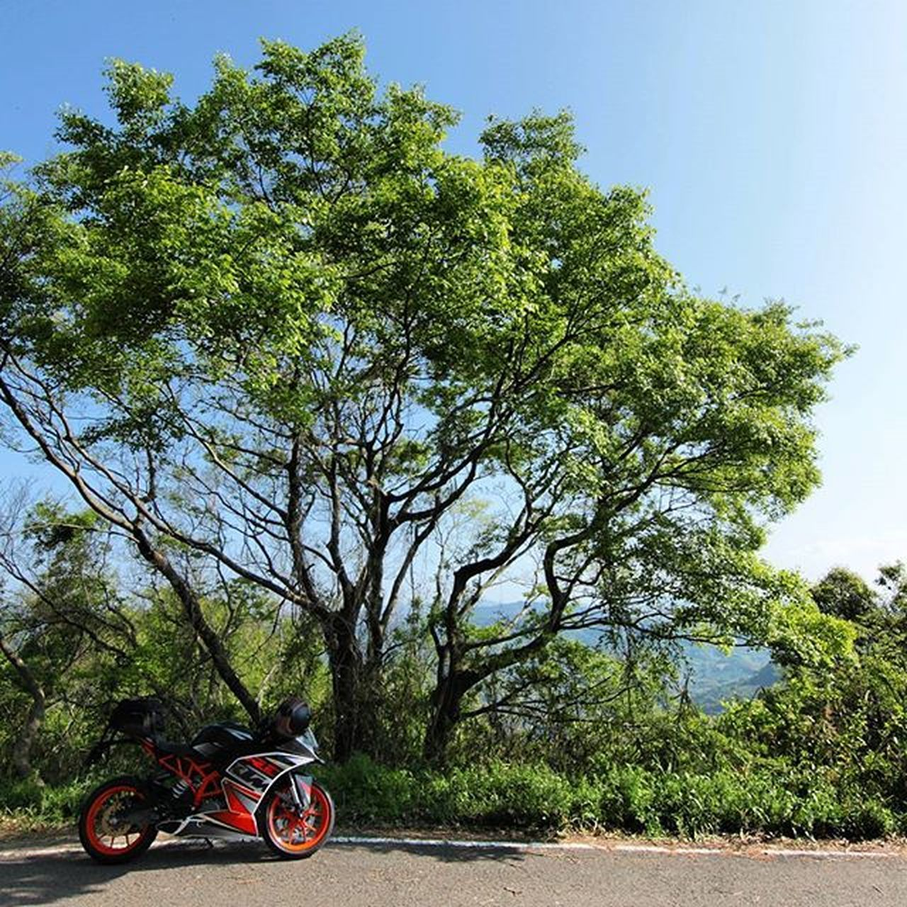 tree, transportation, day, mode of transport, road, bicycle, land vehicle, outdoors, sky, motorcycle, nature, no people, travel destinations, growth, rural scene