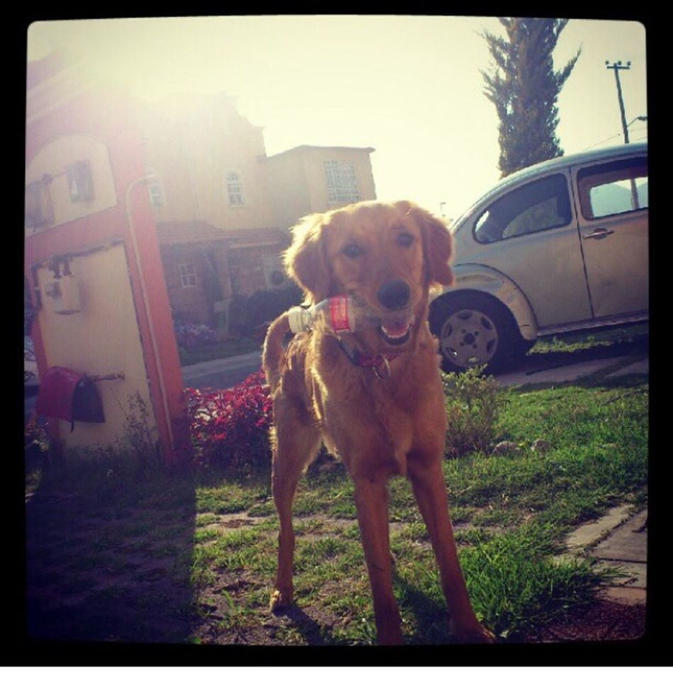 Like a bottle Taking Photos I Love My Dog Cute Pets Lamejor  LaMejorPerra Zaashila