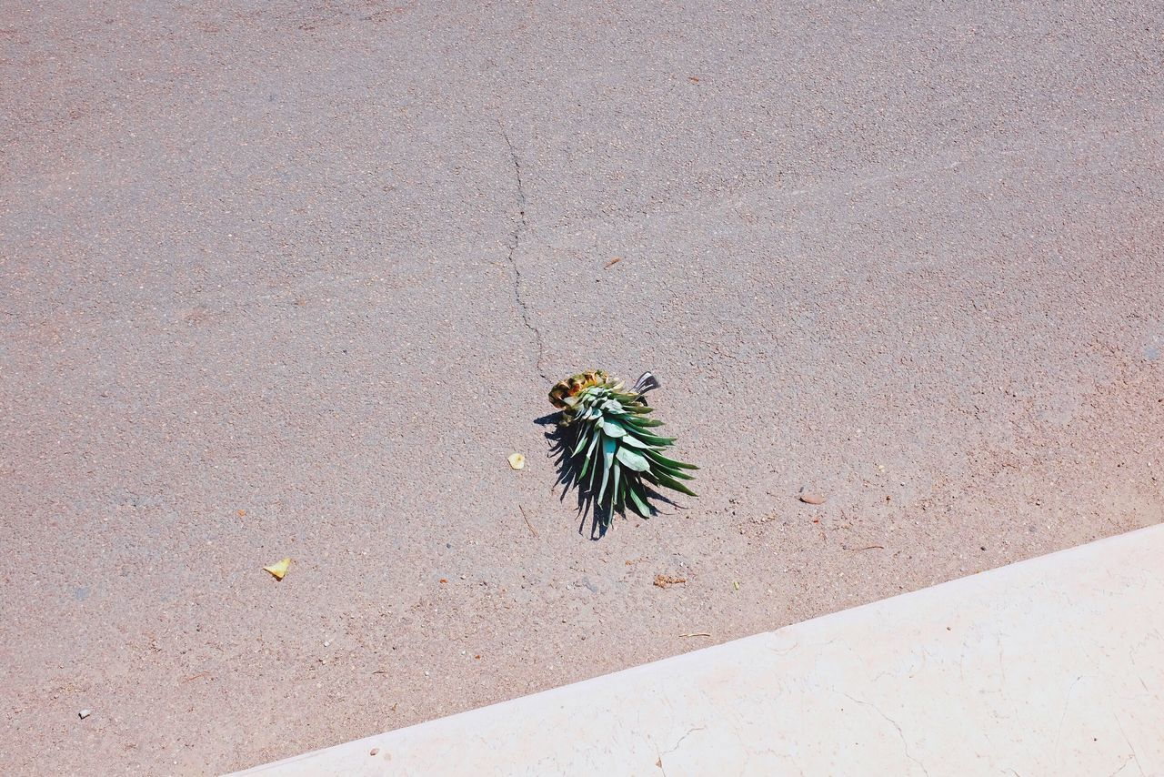 High Angle View BYOPaper! Light VSCO Cam Atmosphere Composition Pineapple IPhone Iphoneonly Iphonephotography IPhoneArtism IPhone Photography IPhoneography Minimalist Minimalism Iphonesia Outdoors